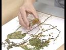 Опасное вторжение. Сорняки находят в семенах овощей по всей Иркутской области. Как спасти огород