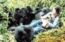 Dian Fossey y gorilas