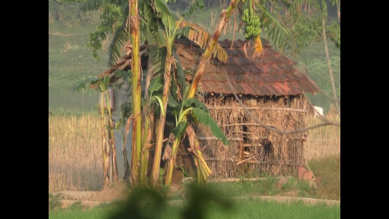 Бхакти-Врикша. Гаура Пурнима-2018 (Маяпур)