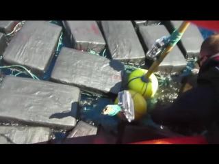 Береговая охрана США задержала морскую черепаху с тонной кокса