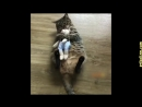 Приколы с кошками и котами 4. Подборка смешных и интересных видео с котиками и