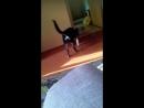 Играет с кошкой