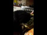кот  и укроп
