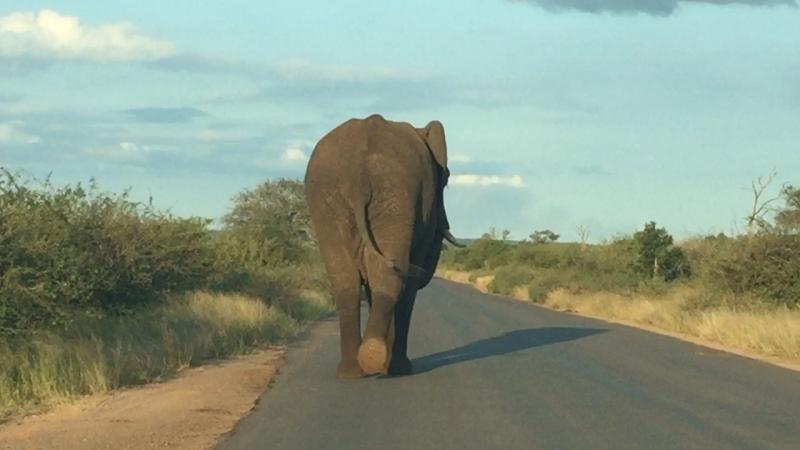 Деловой слон