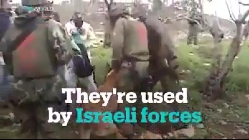 Video Un adolescent palestinien poursuit en justice la compagnie néerlandaise qui a fourni aux forces israéliennes les chiens d