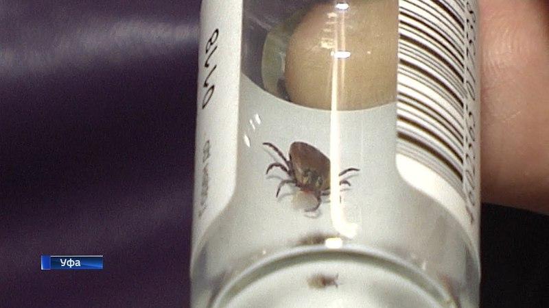 В Башкирии зафиксированы первые случаи укусов клещей