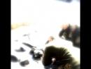 Армейский фонтанчик mp4