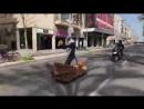 Сцена рождение Симбы из мультфильма король лев, на улицах города (VIDEO ВАРЕНЬЕ)