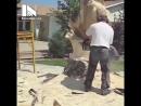Мужик превратил засохший ствол дерева в удивительную скульптуру