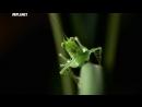 Войны жуков-гигантов / Monster bug wars 11
