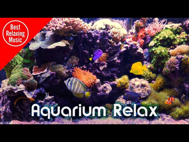 7 hours of Aquarium Music for Relaxing and Sleep