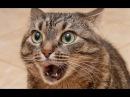 Самые смешные кошки. Смотрите видео про самых смешных кошек этого года!