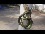 Геккон токи в борьбе с зеленой древесной змеей (Snake And Tokay Gecko Wrapped Round Post)