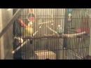 Попугаи и Гербер