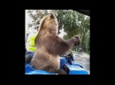 Медведь на мотоцикле среди дороги Это Россия детка