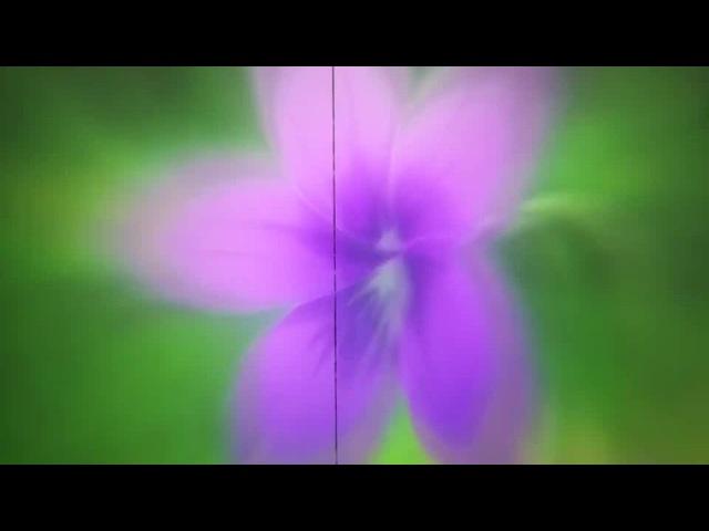 Violet evergarden · coub, коуб