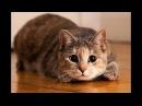 Lustige Tiere Zum Totlachen - Lustige Katzen und Hunde - Beste Lustiger Videos 2018