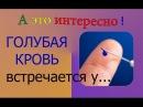 Мистика ГОЛУБАЯ КРОВЬ встречается у...