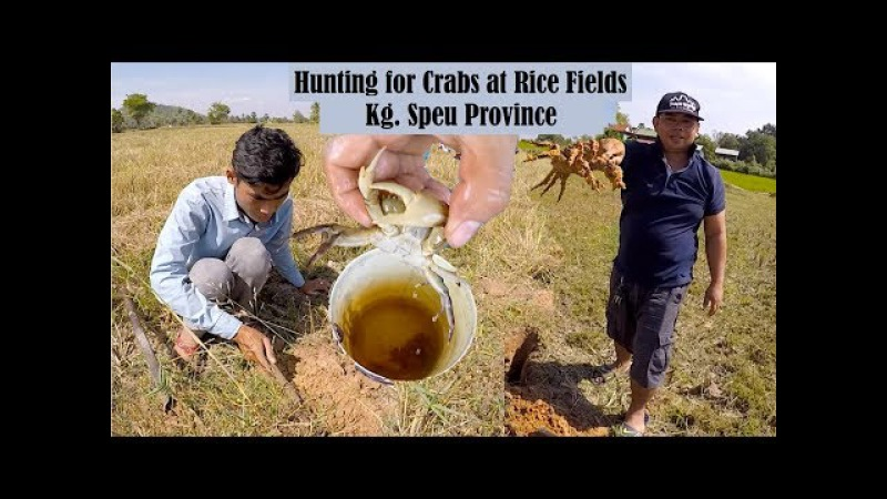 My Hometown Trip 2 - Walk Out to The Field to Find Crabs with Brother Sambo