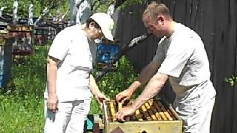 Пчелопакеты:бакфаст, карника 2018. т.89603022455
