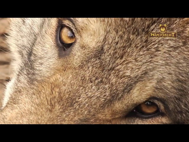 Das ist Wolfsblut Premium Hundefutter