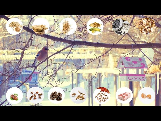 Пташина їдальня. Чим годувати птахів взимку в годівниці?