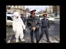 Приколы про ментов, ГИБДД, Полиция приколы подборка подпивко 18
