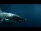Киты-убийцы Касатки (лат. Orcinus orca - несущие смерть)Самый красивый хищник на планете