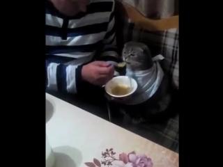 Кот ест по-человечески (6 sec)