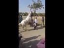 Лошадь танцует 🐎