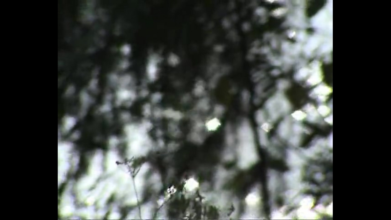 Ant Trip Ceremony - Riverdawn (1968) Видео 2009 г.