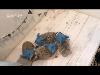 Маленькие беззубики