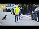 Женщина в Черногории едва не стала жертвой уличного грабителя – ее спас бездомный пес