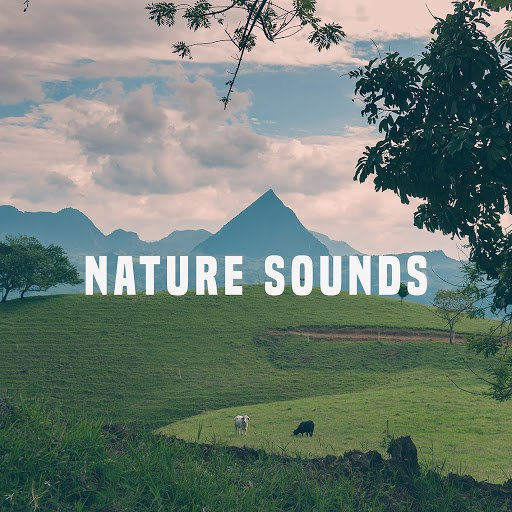 Rain альбом Nature Sounds