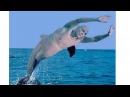 НЕИЗВЕСТНЫЕ СУЩЕСТВА подводного мира. Рыбаки вспороли брюхо акулы и замерли в оцепенении.