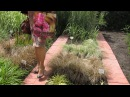 Экскурсия по Агрофирме ПОИСК. ШОУ САД.Питомник. Декоративные и овощи