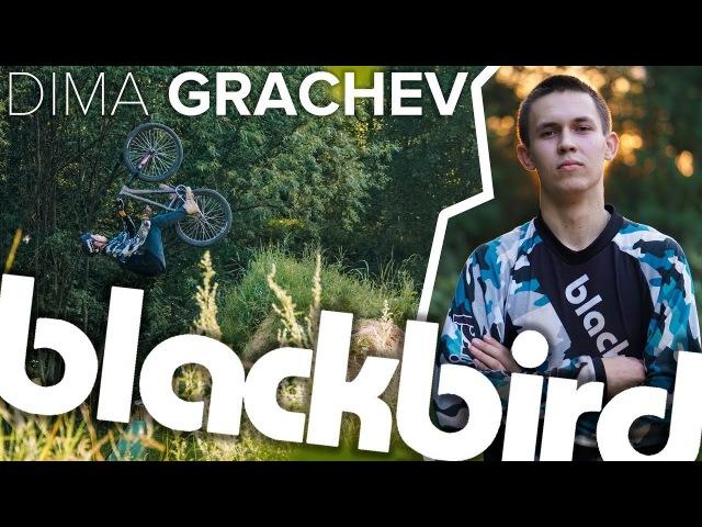 Dima Grachev - PROFILE 2017