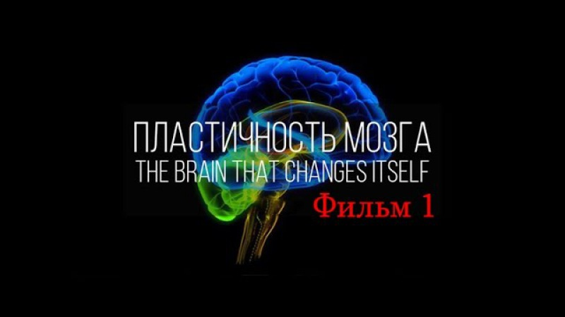 Мозг изменяющий себя сам (Нейропластичность Мозга) / фильм 1 vjpu bpvtyz.obq ct,z cfv (ytqhjgkfcnbxyjcnm vjpuf) / abkmv 1