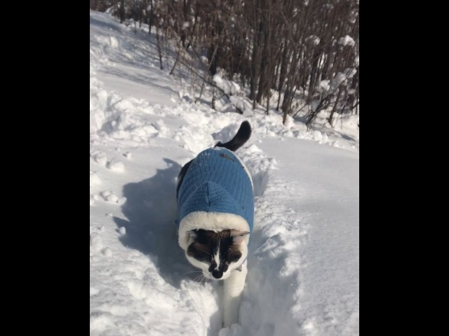 ТРОПАМИ ФЕВРАЛЬЦА🐾 Blue sky, the birds and perfect powder snow. Have a lovely weekend friends☃️❄️✨ * にんにんあさのおさんぽ🌞 雪のなかをスイスイすす...