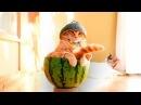ПРИКОЛЫ С КОТАМИ — Смешные коты и кошки 2018 🐈 КОТЫ ПРИКОЛЫ 2018