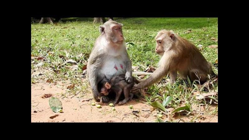 Lovely baby monkey, cute baby monkey, monkeys 1024 Tube BBC