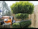 Jak zrobić drzewko Bonsai