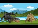 Dạy Bé Nhận Biết Các loài Bò Sát | Động Vật Bò Sát |Các Loài Bò Sát| Con Ếch | Con Cá Sấu| Con Rắn|