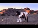 Дорога длиною в жизнь Кочевники Монголии