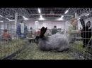 Обзорное видео выставки Ушастики от мала до велика