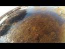На болото на всесезонном мотобуксировщике Койра