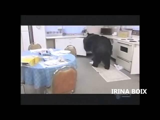 Осторожно, смертельно опасно! Медведь на кухнe