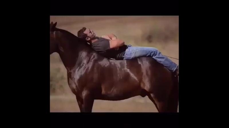 взаимодействие человека и Лошади