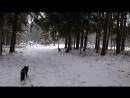 В любой непонятной ситуации иди в лес ЛисЛоки