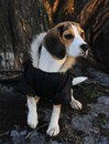 Собака нашего редактора Даши поздравляет всех с Новым годом